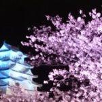 姫路城 お花見・桜開花情報